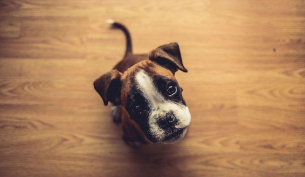 Pets for improved mental health